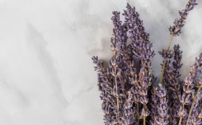 More Than a Soothing Smell; What Lavender Plants Teach Us About Growth
